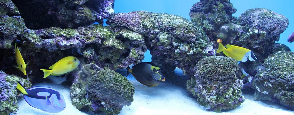 Aquarien vergleich und Tipps