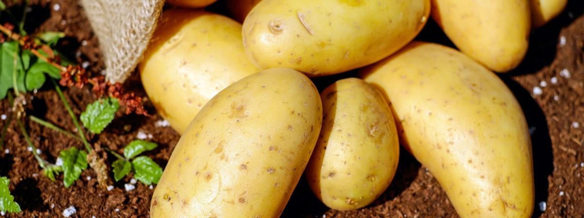 Kartoffelpresse Vergleich