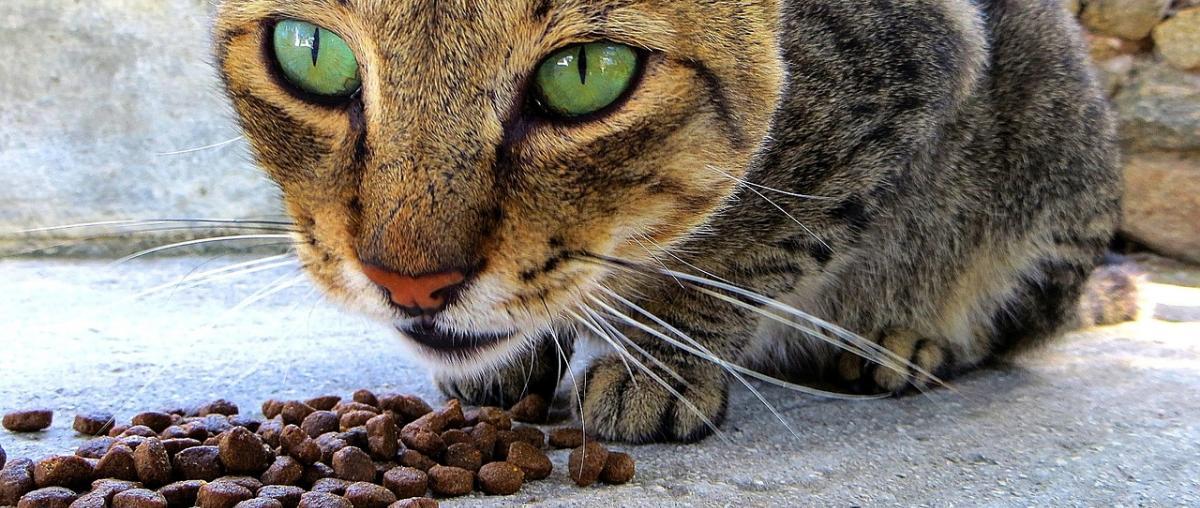 Katzenfutter Ratgeber