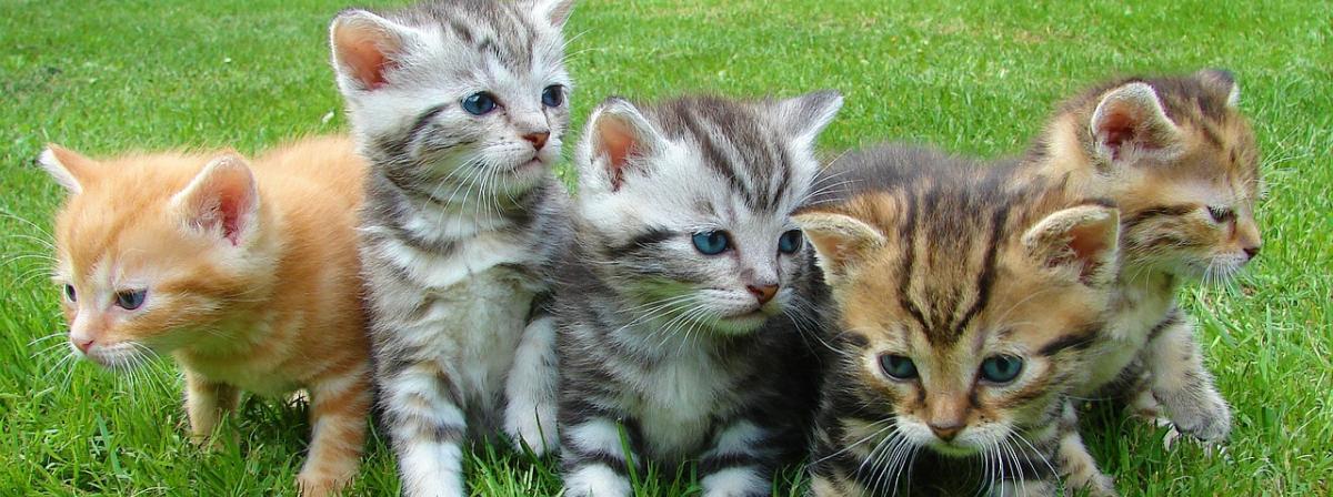 Katzenklappe Vergleich
