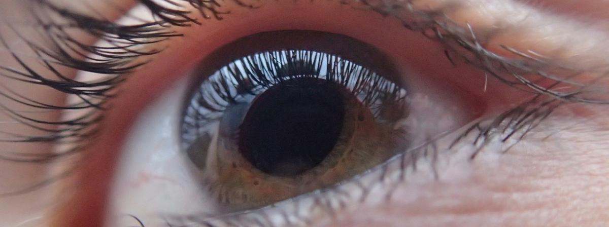 Tageslinsen Vergleich