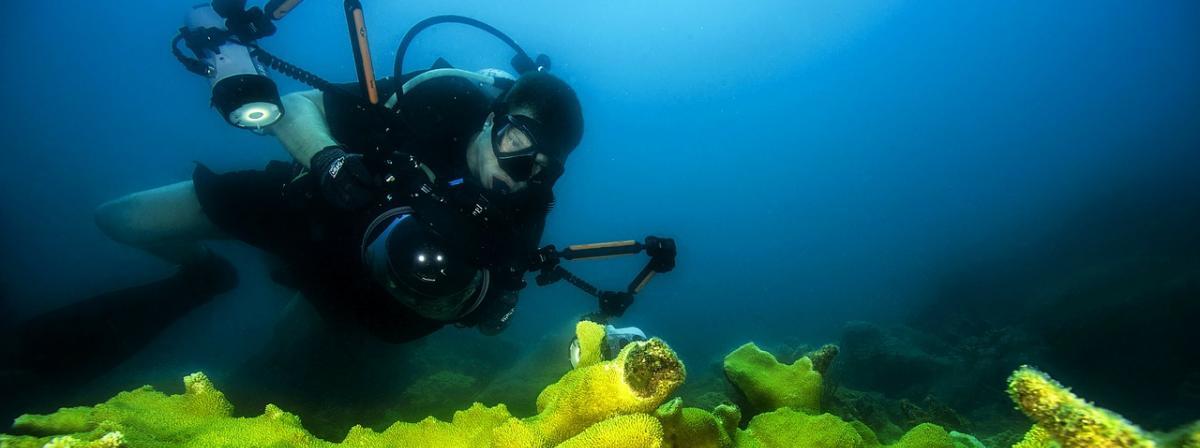 Unterwasser-Kamera Vergleich