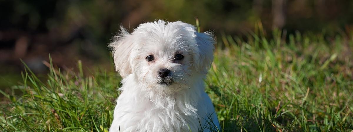 Hunde-Nassfutter Vergleich