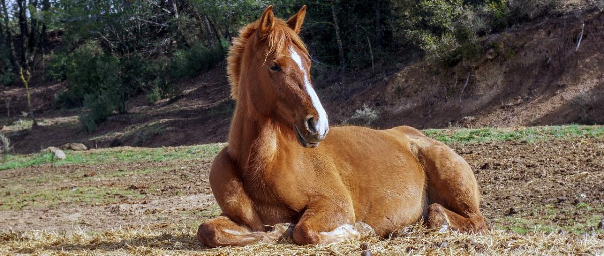 Maulkorb für Pferd Ratgeber