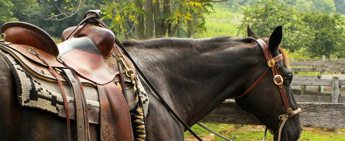 Pferde Satteltasche Vergleich