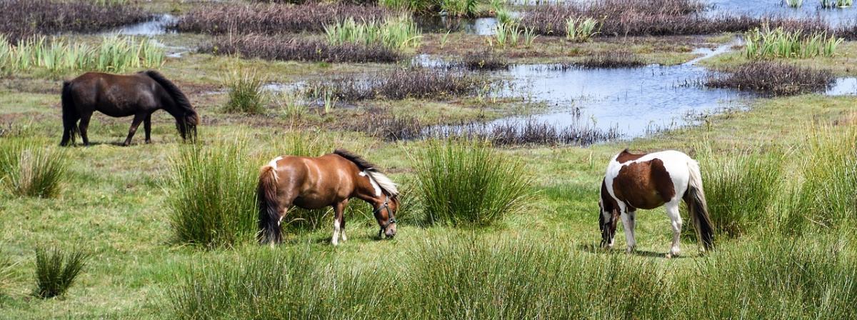 Ponysattel Ratgeber