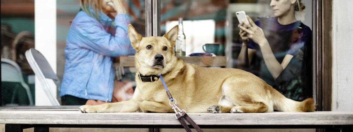 Wolfsblut Hundefutter Ratgeber