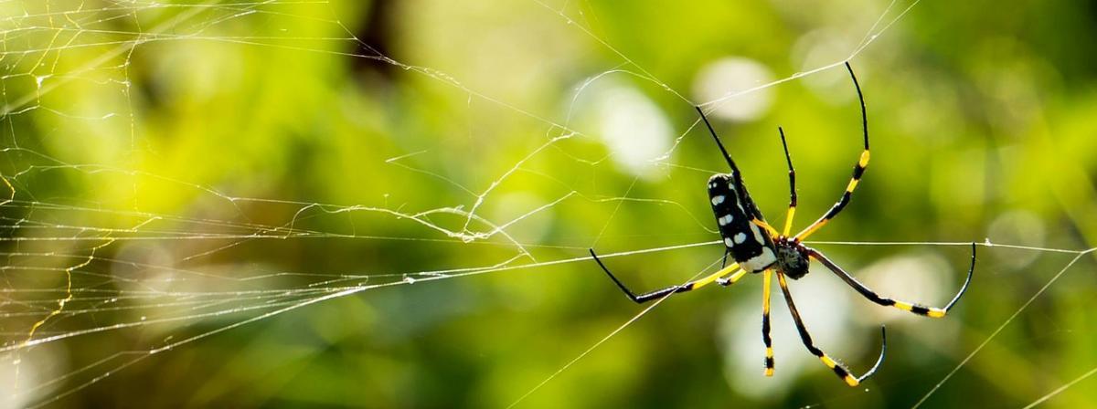 Anti-Spinnenspray Vergleich