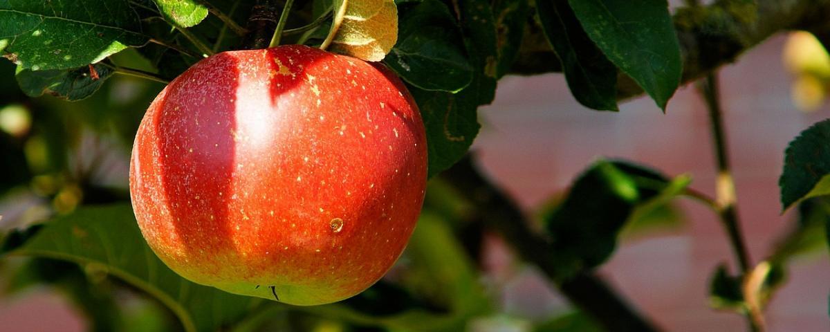Apfelentkerner Vergleich