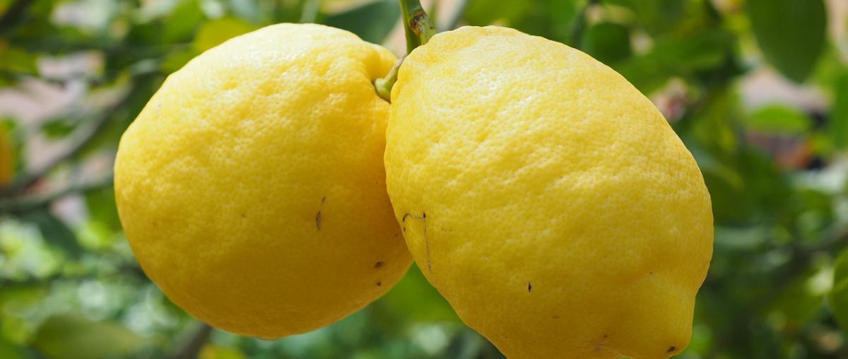 Citruspresse Vergleich