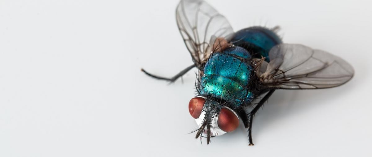 Elektrische Fliegenklatsche Vergleich