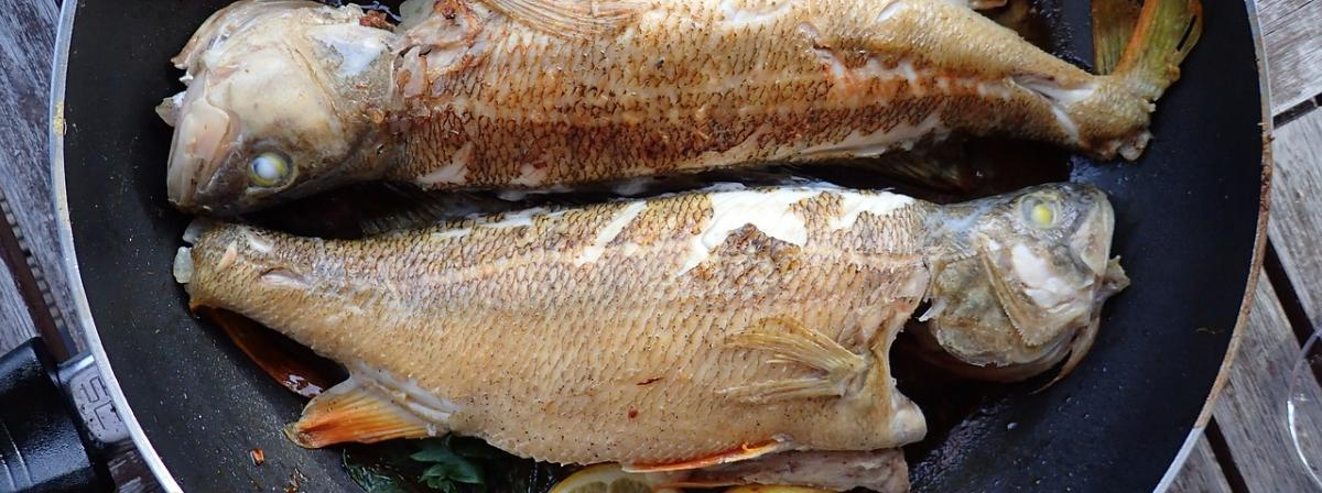 Fischentschupper Ratgeber