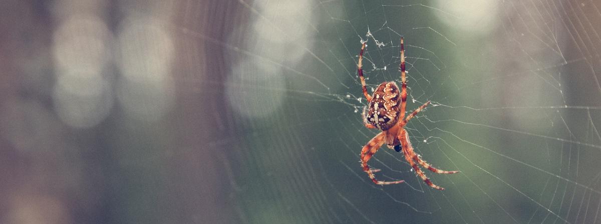 Spinnenfänger Vergleich