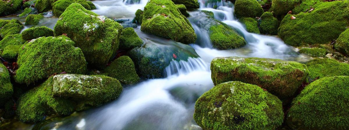 Wasserkanister Vergleich