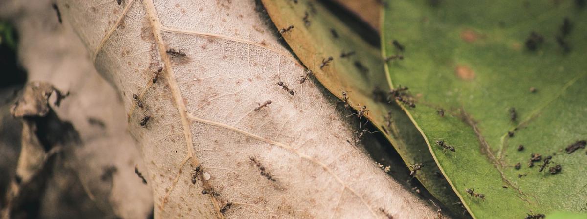 Ameisenabwehr Tipps und Vergleich