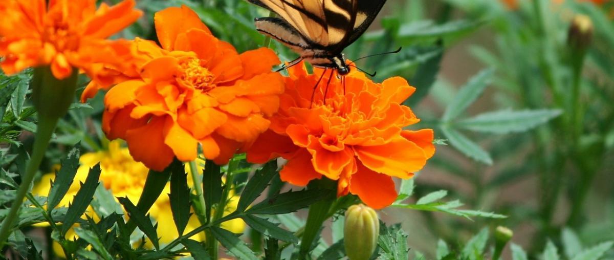 Blumendünger Ratgeber