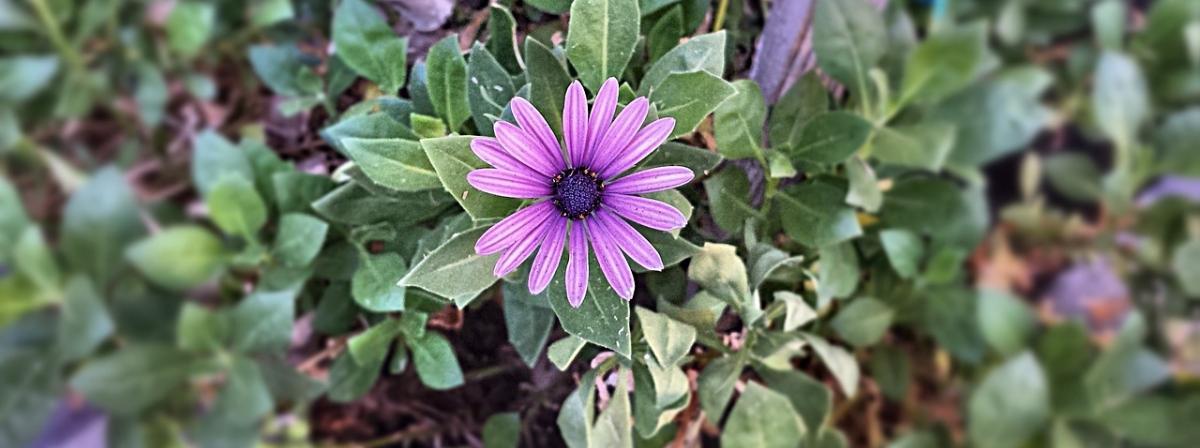 Blumenerde Vergleich