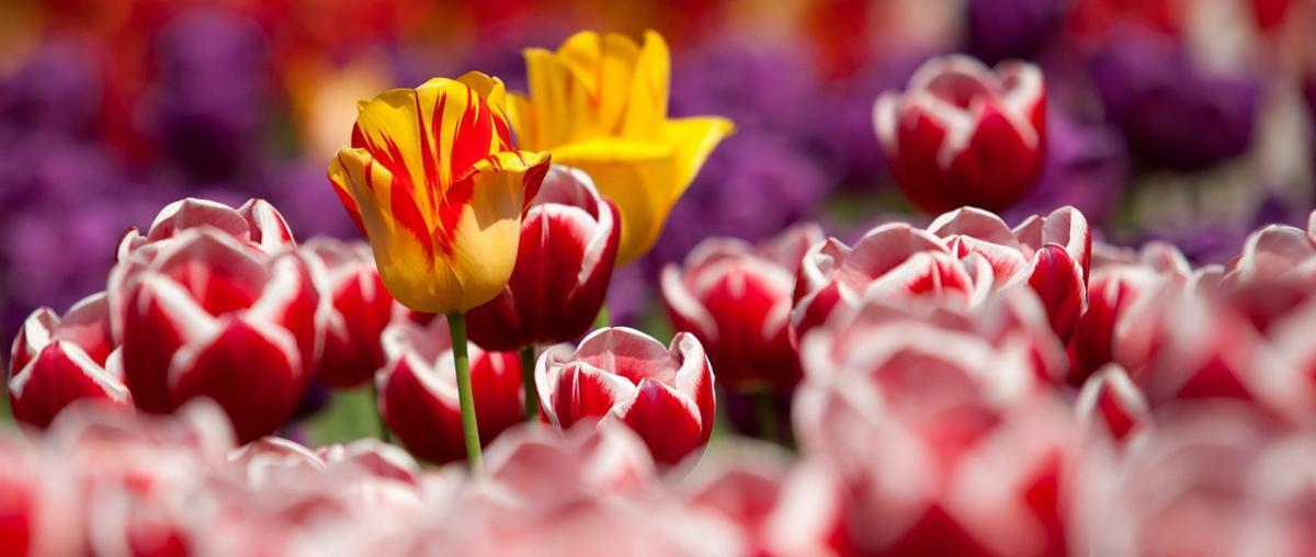 Blumensamen Ratgeber