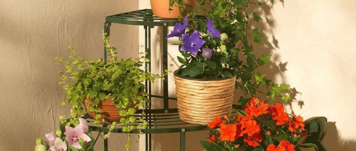 Blumentreppe Ratgeber