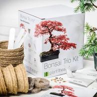 Bonsai Bestseller