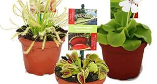 Fleischfressende Pflanze Bestseller