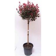 Gartenbaum Bestseller