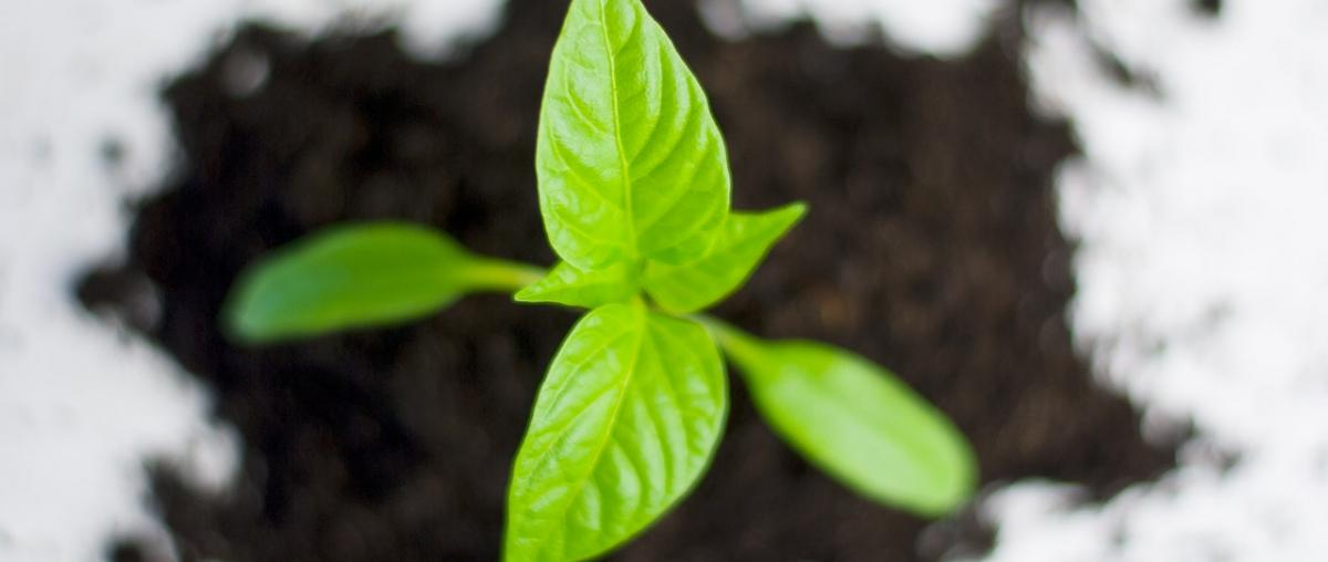 Gartenbaum Ratgeber
