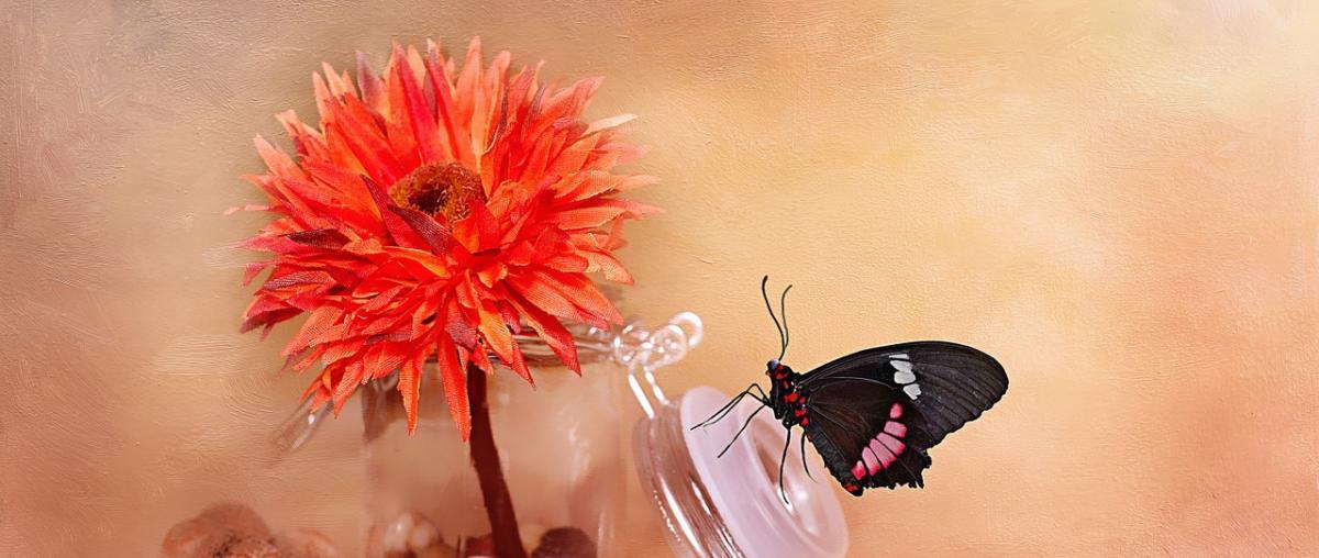 Kunstblume Ratgeber