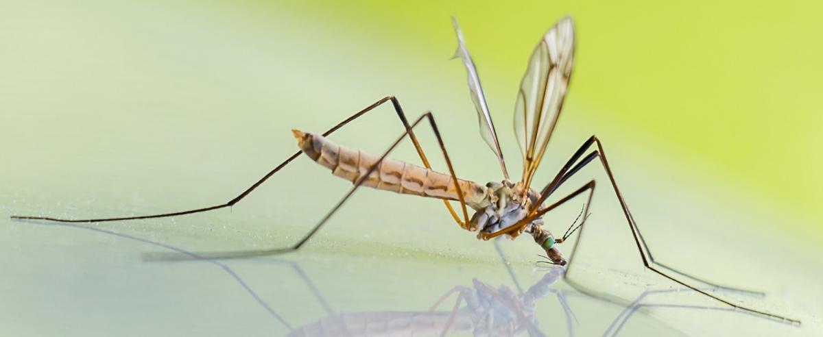Mückenabwehr Vergleich