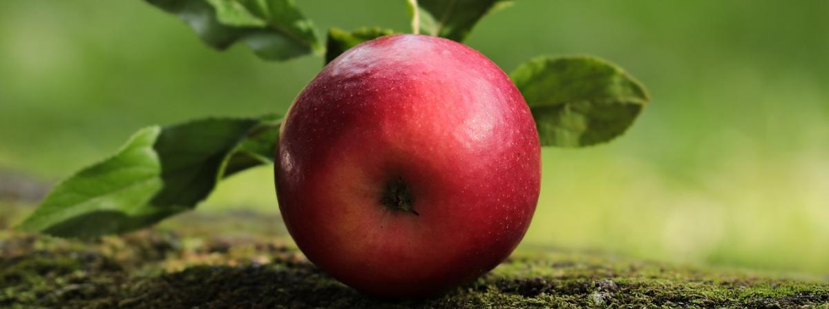 Obstpflücker Ratgeber