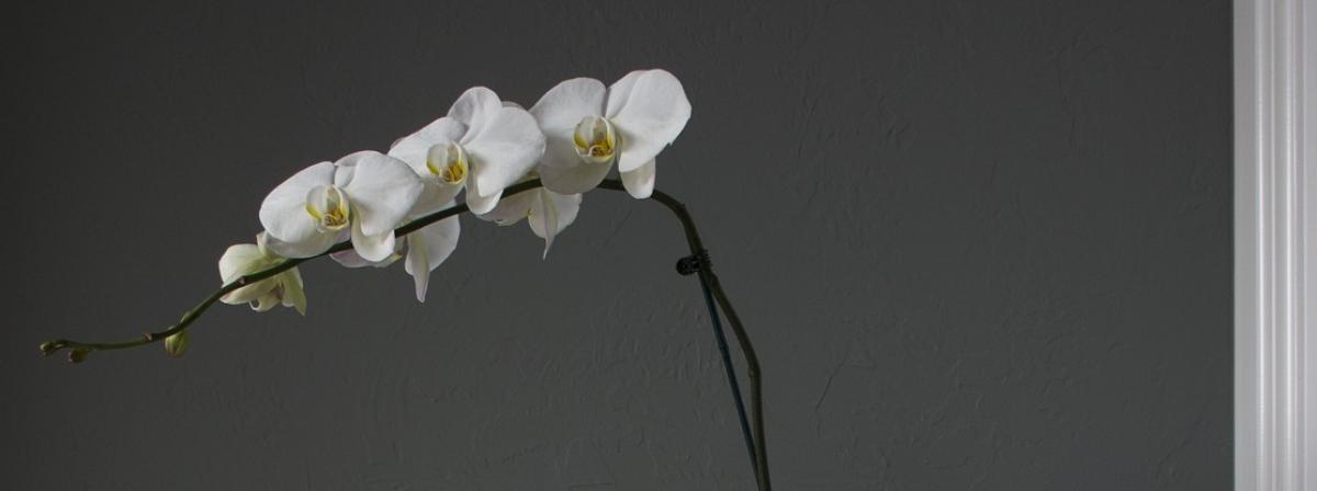Orchideendünger Ratgeber