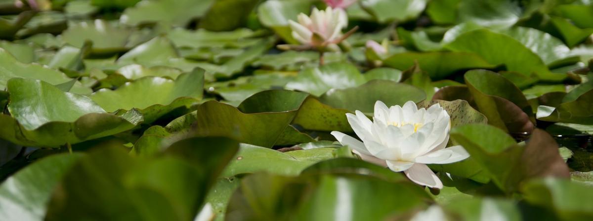 Wasserpflanze Vergleich