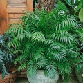 Zimmerpflanze Bestseller
