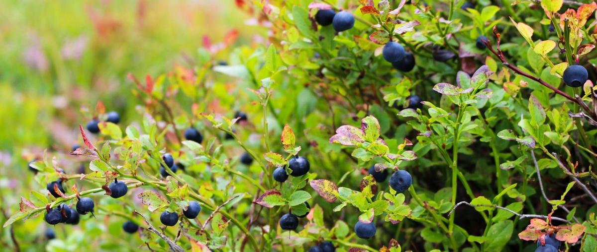 Antioxidantien Kapseln Vergleich