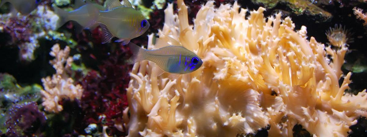 Aquarien Sicherheitsunterlage Vergleich