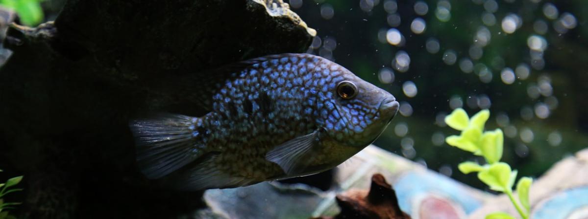 Aquarien Wasseraufbereiter Vergleich