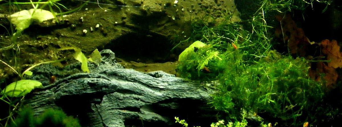 Aquarium Beleuchtung Vergleich