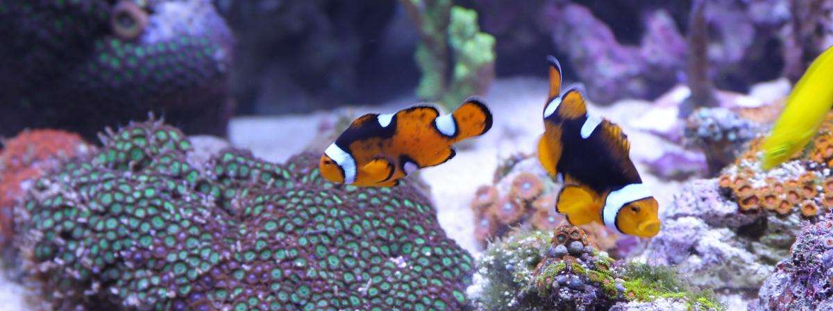 Aquarium Futterautomat