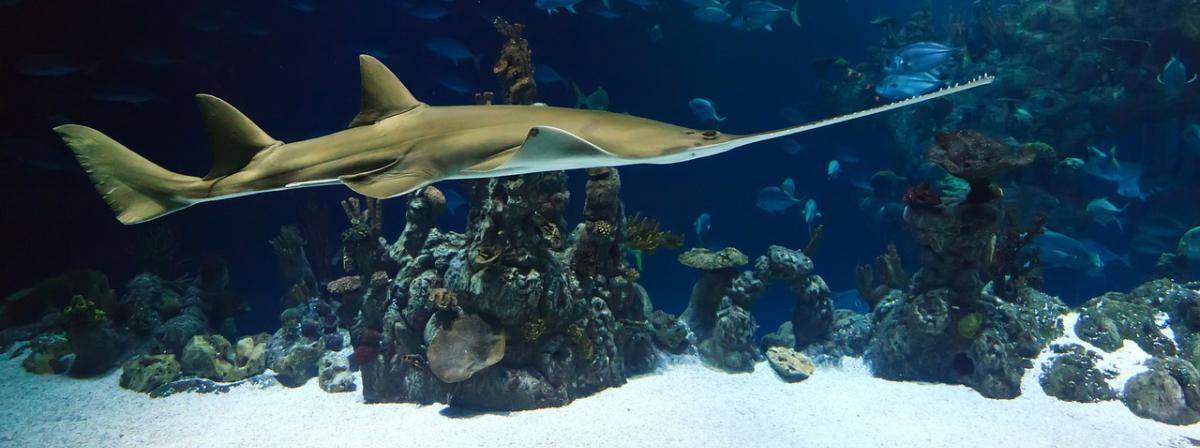 Aquarium Kies Ratgeber