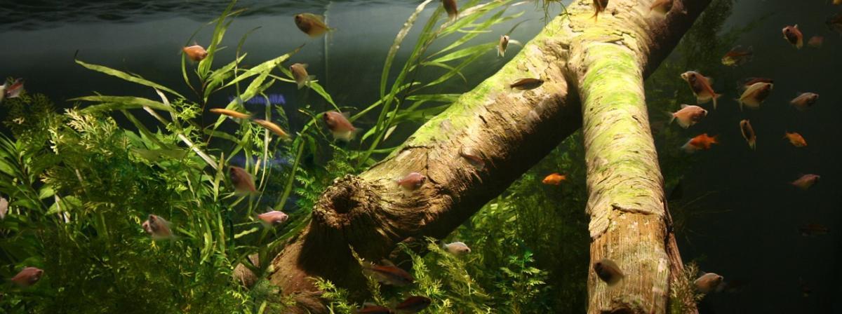 Aquarium Luftpumpe Vergleich