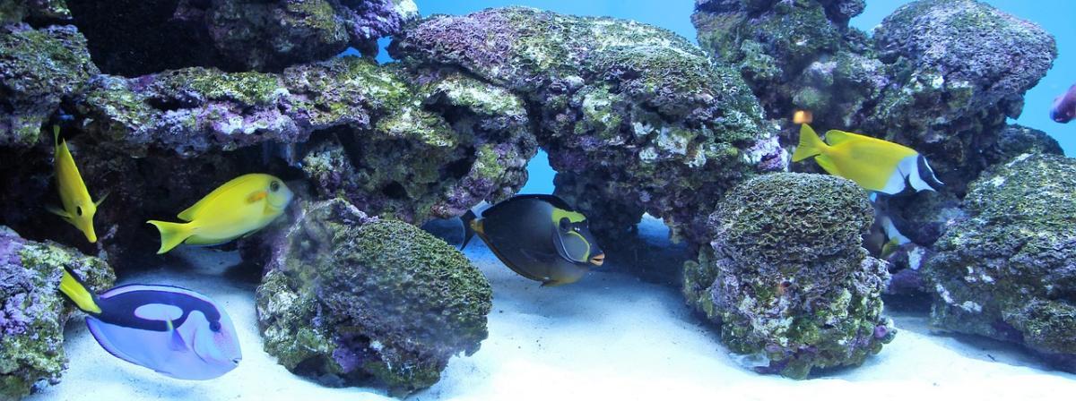 Aquarium Reglerheizer Vergleich