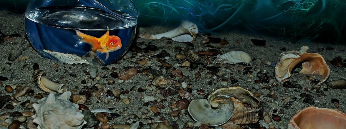 Aquarium Sand Vergleich