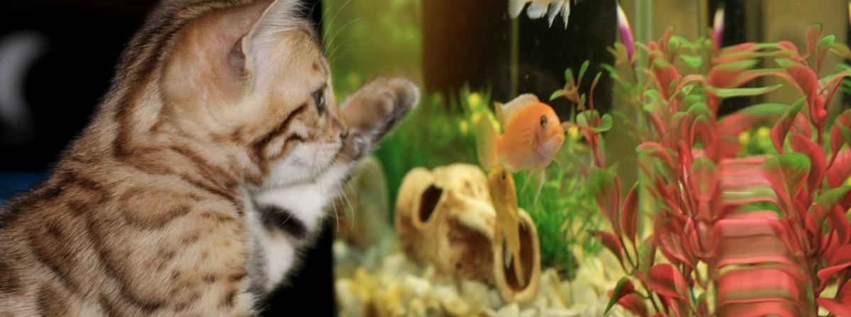 Aquarium Scheibenreiniger Vergleich