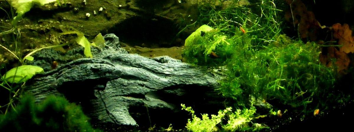 Aquarium Thermometer Vergleich