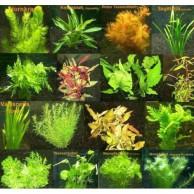 Aquarium Wasserpflanze Bestseller
