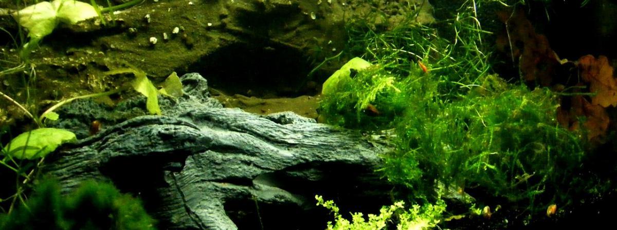 Aquarium Wurzel Infos