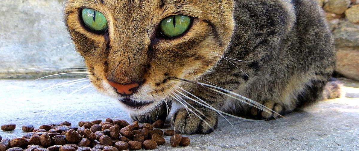 Bio Katzenfutter Vergleich