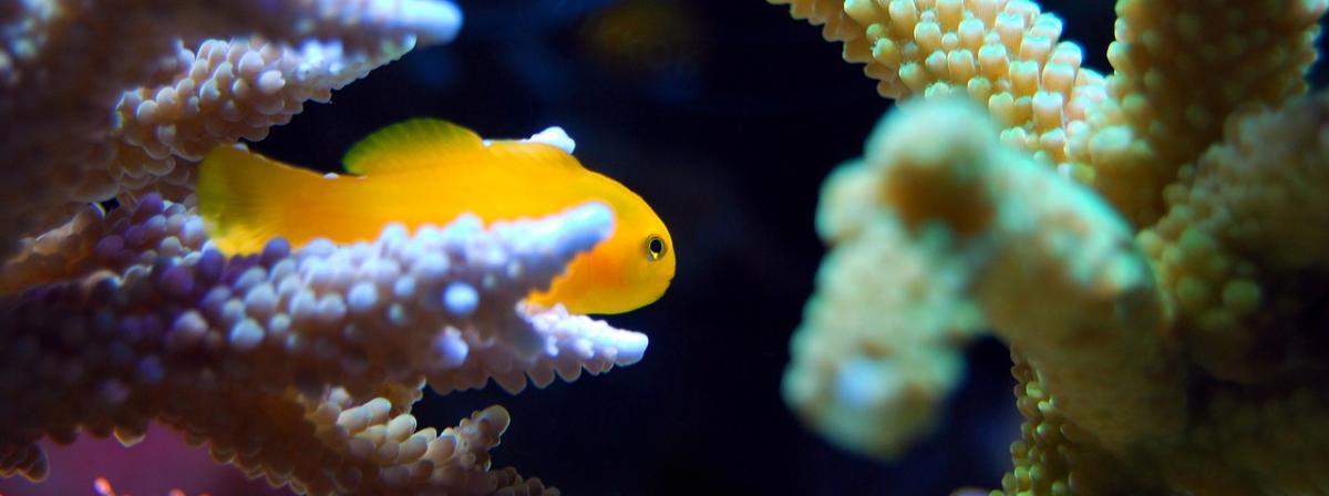Eheim Aquarium Filter Vergleich