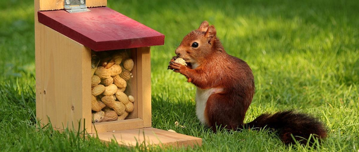 Eichhörnchenfutter Ratgeber