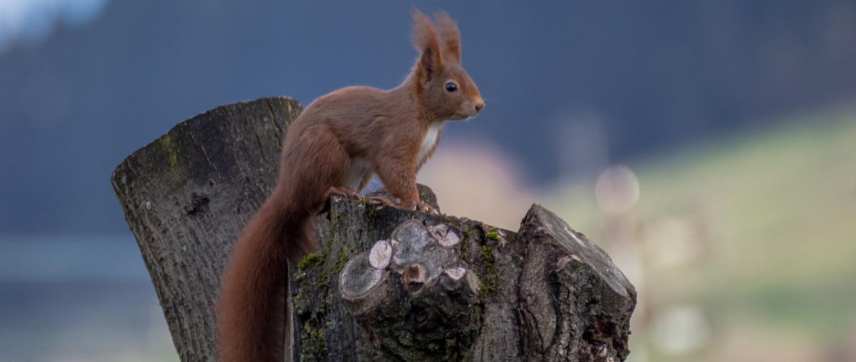 Eichhörnchenhaus Vergleich